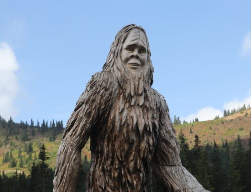What to Look Forward to this Winter at Sasquatch