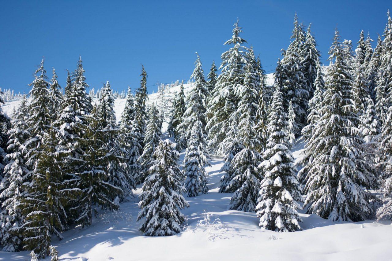 Snowy trees underneath a blue sky at Sasquatch Mountain Resort