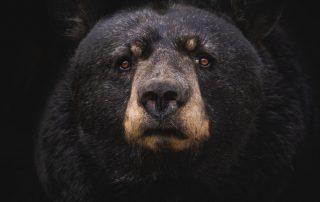 Bear Season & Waste Management at sasquatch mountain resort